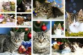 Christmas animals collage — Stock Photo