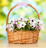 Bouquet of beautiful summer flowers in basket, on green background — 图库照片