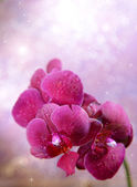 Beautiful blooming orchid on light color background — Zdjęcie stockowe