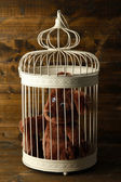 Toy bear in decorative cage on wooden background — Stock Photo