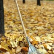 Cleaning of autumn leaves in park — Stock Photo #38102497
