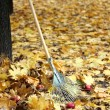 Cleaning of autumn leaves in park — Stock Photo #38102517