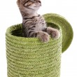 Little kitten in wicker basket isolated on white — Stock Photo #38103729