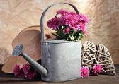 Bukiet chryzantema różowa w konewka na drewnianym stole — Zdjęcie stockowe