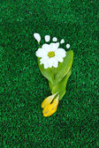 Footprint of leaves and flowers on grass close-up — Stock Photo
