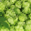 Stock Photo: Fresh green hops, close up