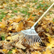 Cleaning of autumn leaves on green lawn — Stock Photo #38186219