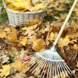 Cleaning of autumn leaves on green lawn — Stock Photo #38186249
