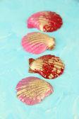 Färgglada snäckskal på färg trä bakgrund — Stockfoto
