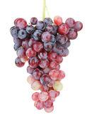 Fresh grape, isolated on white — Stock Photo
