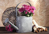Bouquet of pink chrysanthemum in watering can on wooden table — Zdjęcie stockowe