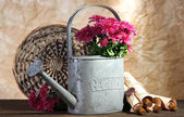 Bouquet of pink chrysanthemum in watering can on wooden table — Photo