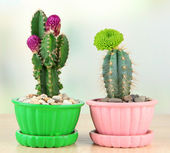 Cactuses in flowerpots with flowers, on wooden table — Foto Stock