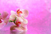 Beautiful blooming orchid with water drops on light color background — Stock Photo