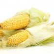 Fresh corn isolated on white — Stock Photo