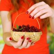 Stock Photo: Womhands holding basket of ripe red cranberries, close u