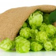 Stock Photo: Fresh green hops in burlap bag, isolated on white