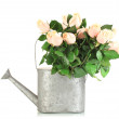Beautiful bouquet of roses in watering can, isolated on white — Stock Photo