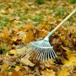 Cleaning of autumn leaves on green lawn — Stock Photo #38359071
