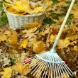 Cleaning of autumn leaves on green lawn — Stock Photo #38359087