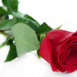 Stock Photo: Red rose isolated on white