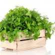 Wooden box with parsley and dill isolated on white — Stock Photo #38367203