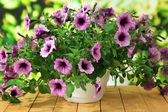 Purple petunia in flowerpot on wooden table on nature background — Stock Photo