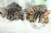 Two cats on plaid close-up — Stock Photo