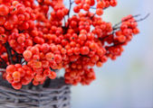 Artificial berries, on light background — Stock Photo