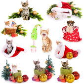 Collage of animals with Christmas decorations isolated on white — Stock Photo