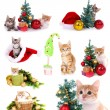 Collage of kittens with Christmas decorations isolated on white — Stock Photo #38390077