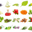 Collage of herbs and plants isolated on white — Stock Photo