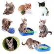 Collage of kittens and different stuff for them isolated on white — Stock Photo #38390179