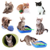 Collage of kittens and different stuff for them isolated on white — Stock Photo
