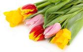 Belles tulipes dans seau isolé sur blanc — Photo
