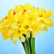Beautiful yellow daffodils on blue background — Stock Photo #38476465
