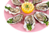 Oysters isolated on white — Stock Photo
