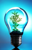 Green eco energy concept. Plant growing inside light bulb on blue background — Stock Photo