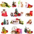 Collage of kittens and puppy with Christmas decorations isolated on white — Stock Photo