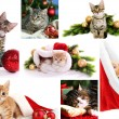 Christmas cats collage — Stock Photo