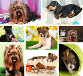 Collage of cute puppies — Stock Photo
