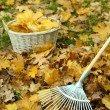 Cleaning of autumn leaves on green lawn — Stock Photo #38595463
