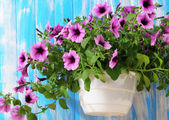 Purple petunia in flowerpot on wooden background — Stock Photo