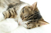 Cat sleeps on plaid close-up — Stock Photo