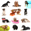 Collage of cute puppies isolated on white — Stock Photo