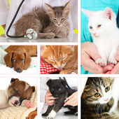 Collage of different pets at vet — Stok fotoğraf