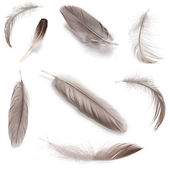 Collage of fluffy feathers isolated on white — Stock Photo