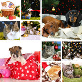 Collage de animales con decoraciones de la navidad — Foto de Stock