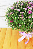 Chrysanthemum bush in pot on table on wooden background — Stock Photo