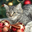 Cat in celebratory tinsel on Christmas tree background — Stock Photo #38790069